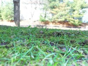 Going green; spring grass