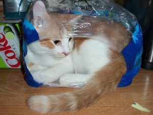 Stones, cat in water bottle packaging