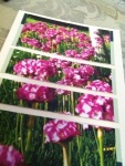 pink flowers on blank greeting handmade card